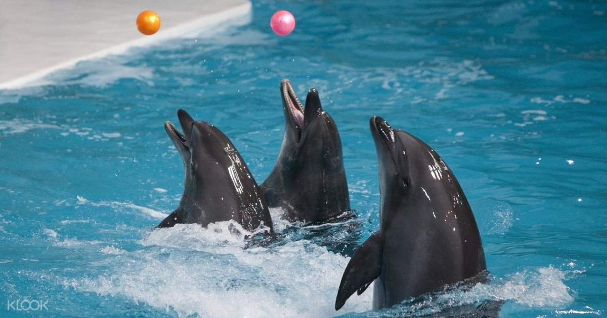 Dubai Dolphin and Seal Show